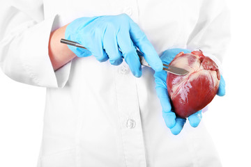 Doctor holding heart organ and scalpel close up