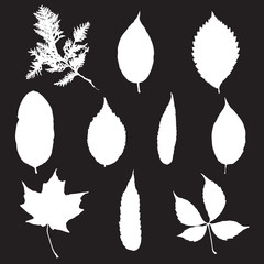 Leaf silhouette collection, foliage set, vector