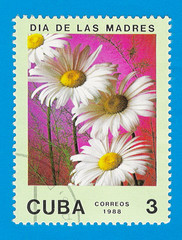Cuba stamp 1988 - Mother's day - Daisies