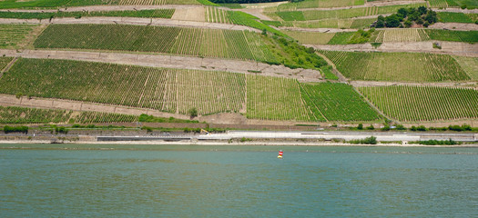 vineyard at a river