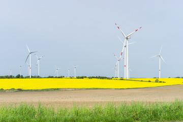 Rapsfeld und Windräder