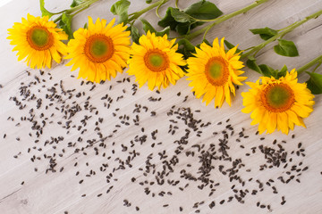Sunflower with seeds.