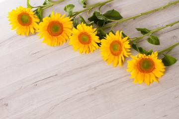 Series of sunflowers.