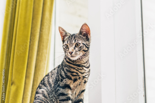 Grey striped tabby kittens