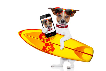 surfing dog selfie