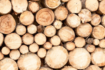 Background of dry firewood stacked up on top of each other in a pile