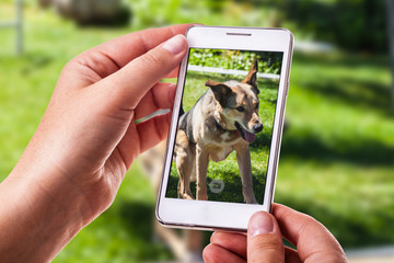 dog phone photography