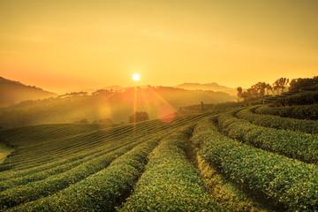 Sunrise view of tea plantation landscape at 101 Chiang Rai Tea,N Wall mural