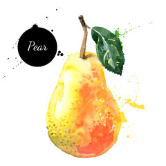 Hand drawn watercolor painting pear on white background