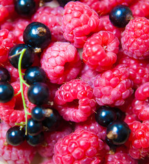 colorful background of mix ripe berries
