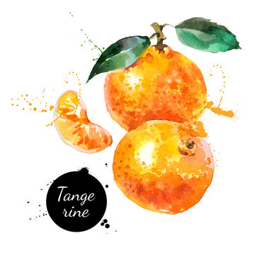 Hand drawn watercolor painting tangerine on white background