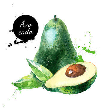 Hand drawn watercolor painting fruit avocado on white background