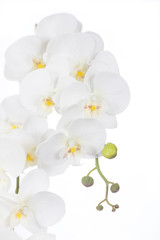 White Phalaenopsis orchids Artificial flowers made of fabric and