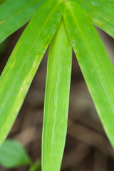 Green leaf bamboo texture