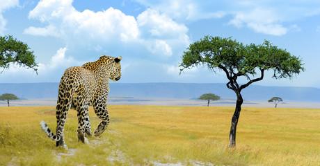 Deurstickers Panter Leopard