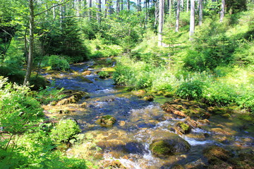 Wilder Bach mit klarem Wasser strömt durch einen Wald