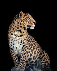 Photo sur Aluminium Leopard Leopard