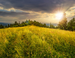 meadow on a hillside near forest at sunset