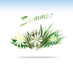 watercolor picture summer grass and blooming daisies and the wor