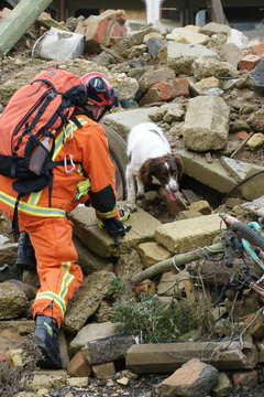 search and rescue dog searcing building rubble