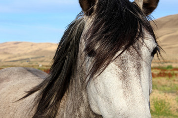 Grey and White Horse