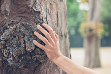 Female hand touching tree in forest