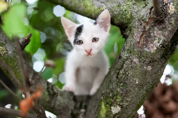 Cute little kitten on the tree in garden / Cat climbing the tree