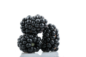 Blackberry fruit on white Background
