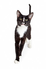 Black and White Young Cat Walking Forward