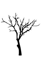 Old dry tree silhouette