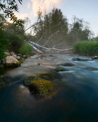 wild river with a rock and a fallen birch tree with fog
