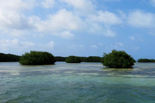 Reserva de mangue no mar caribenho