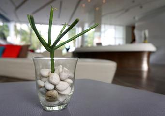 cactus plants in the pebble pot