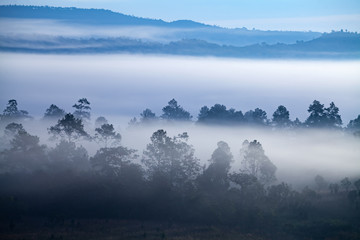 Aluminium Prints Blue sky Fog in forest at Khao-kho Phetchabun,Thailand