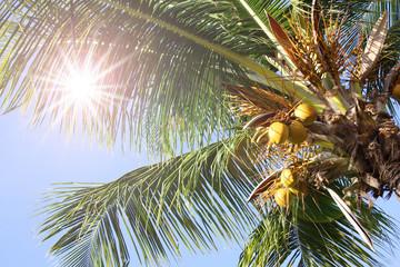 ヤシの木と日差し、紫外線 palm tree and ultra violet rays