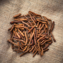 Yarsagumba, also known by the scientific name Cordyceps sinesis. Corydceps sinensis is a valuable herb used for different medicinal purposes. Cordyceps also known for a high price value.