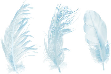 three light blue feathers isolated on white