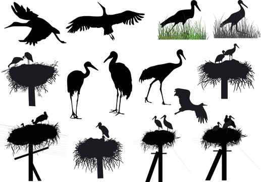large group of storks and cranes on white