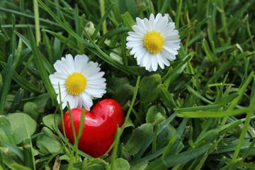 Rotes Herz mit zwei Gänseblümchen auf Wiese