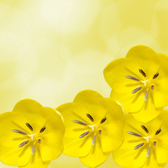 Yellow tulips flowers, floral arrangement, isolated.