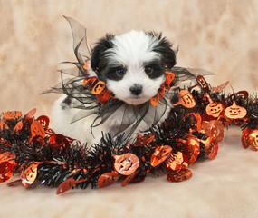 Wall Mural - Halloween Puppy