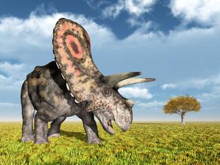 Dinosaur Torosaurus