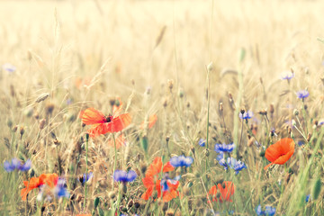 Composition with meadow flowers. Nice summer background.