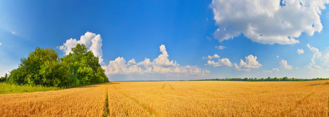 Tuinposter Platteland Wheat field in summer countryside