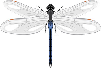 Dragonfly isolated on a white