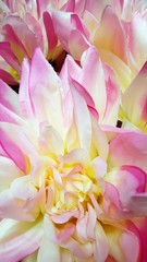 Pastel Pink and Yellow Flowers