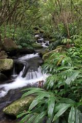 Hawaiian Stream