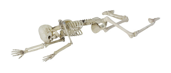 Skeleton Laying Partially Prone and Sideways