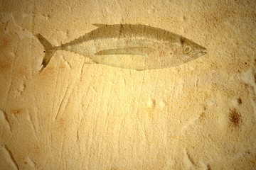 Albacore old background