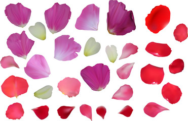 red and purple flower petals isolated on white